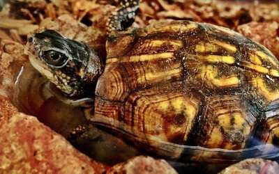 Bathtime for Turtle…