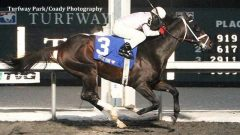 Royal Son (Tiznow) seen winning the John Battaglia Memorial Stakes