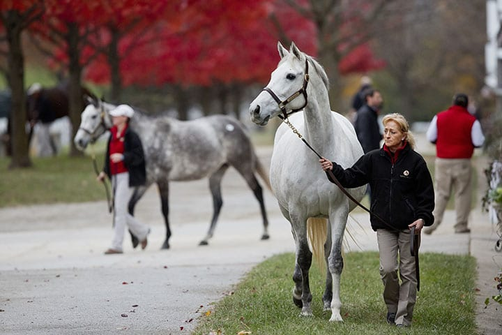 Janis S Joy Tops Solid Monday Session Of Keeneland