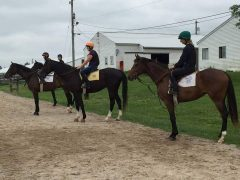 NARA students line their horses up before class, summer 2015