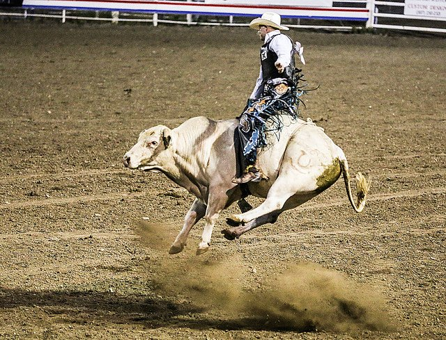 bull rider almost takes flight.