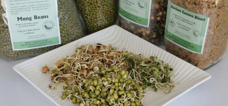 Sprouts: The Ultimate Winter Vegetable