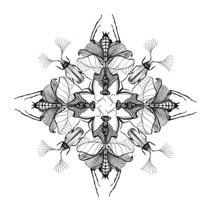 Pauline-Huard-design-textile-stylisme-illustration-graphisme-insecta-rosace-5