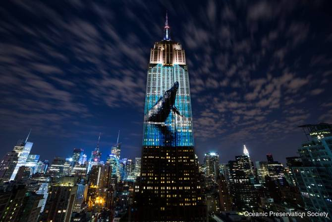 160 images of endangered species were projected onto the Empire State Building. Photo: Oceanic Preservation Society
