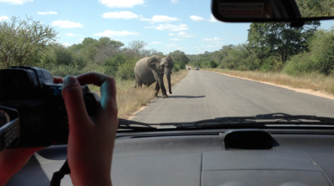 Elephant attack on car full of tourists in African safari park caught on camera