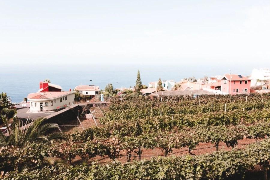vineyards on tenerife