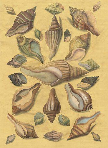 Grand Shells golden