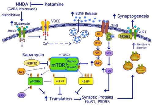ketamine mechanism