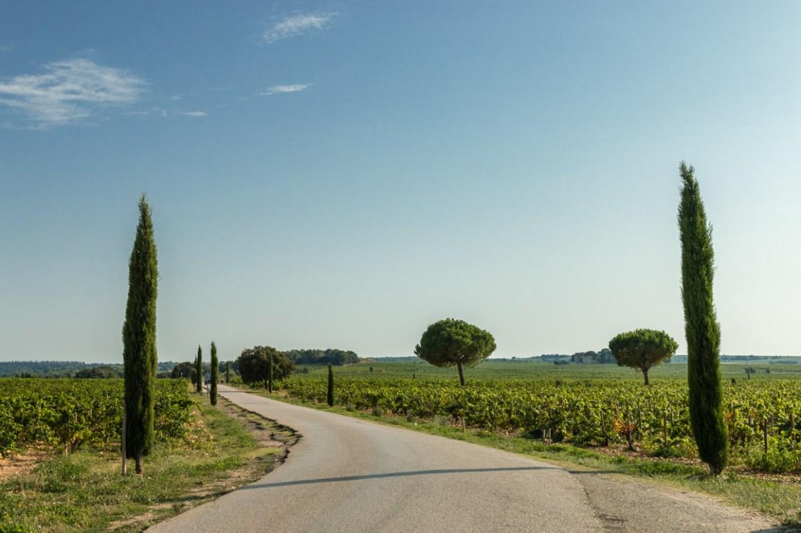 Courthézon vineyards