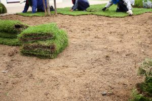 3 Benefits Of Sod