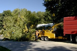 Why Is Professional Tree Removal Important?