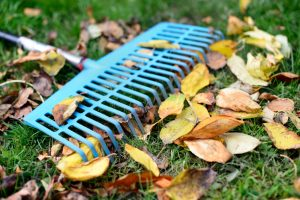 5 October Landscaping Tips for Maintaining Your Outdoor Space this Fall