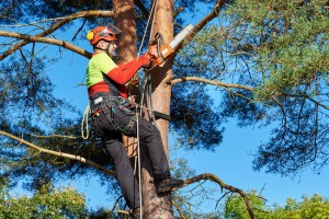 Improve Your Property With Autumn Tree Trimming