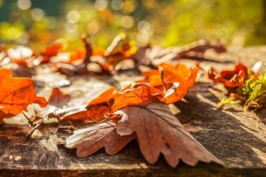 3 Things to Look for in Professional Leaf Removal Service