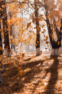 Improve Your Lawn's Health with Leaf Removal