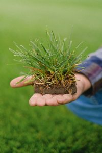 Considering Sod Installation This Spring? Here's What You Need to Know.