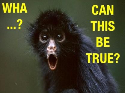wha monkey