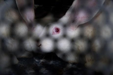Conejo en un contenedor en España.