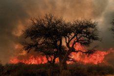 DIEGO LIMA Córdoba, 30 de septiembre de 2019 Incendio forestal en la región de Mina Clavero.