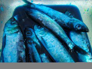 valdezfishing14
