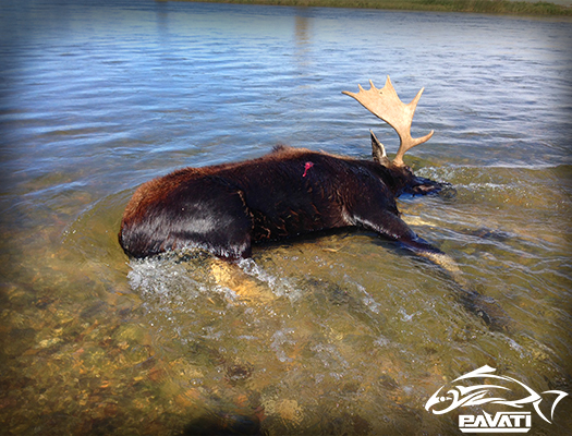 Moose Hunting1