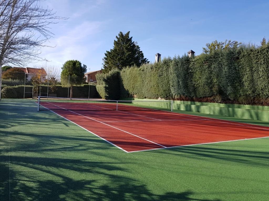 colores tenis