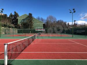Limpieza musgo tenis
