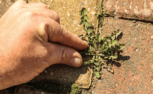 You could remove weeds from your block paving by hand