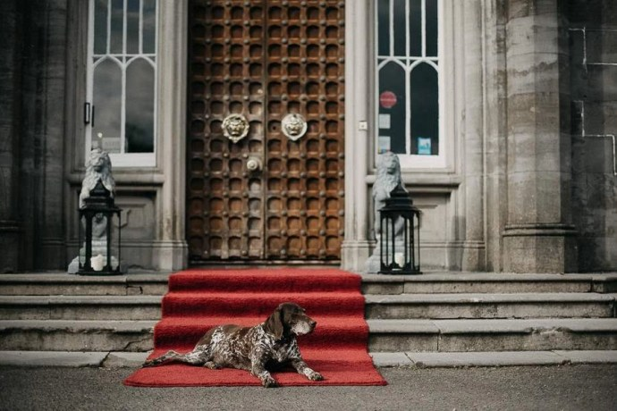 dog in front of door in Belleek Castle