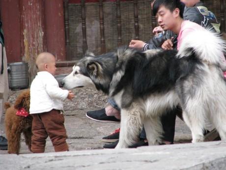 Lijiang 26
