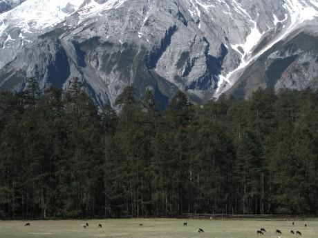 Lijiang - Yulong Snow Mountains 7