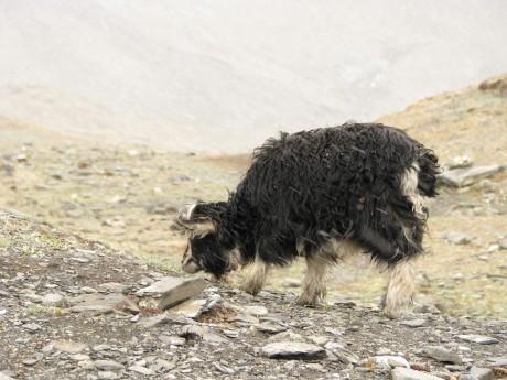 Przez góry (wTybecie) Tsetang - jezioro Yamdrok - Gyantse 19