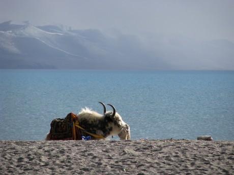 Nam-Tso - święte jezioro tybetańskie 7