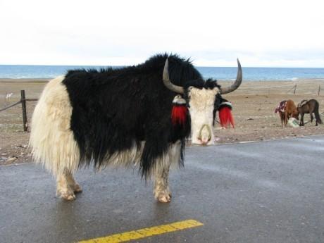 Nam-Tso - święte jezioro tybetańskie 12