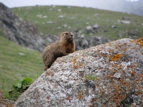 Treking wgórach Tien Shan (Kirgistan) 15
