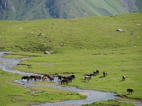 Treking wgórach Tien Shan (Kirgistan) 27