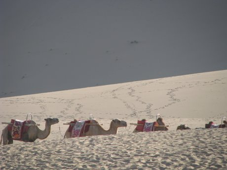 Dunhuang - pustynia, wielbłądy ibuddyjskie groty 12