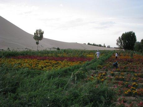 Dunhuang - pustynia, wielbłądy ibuddyjskie groty 38