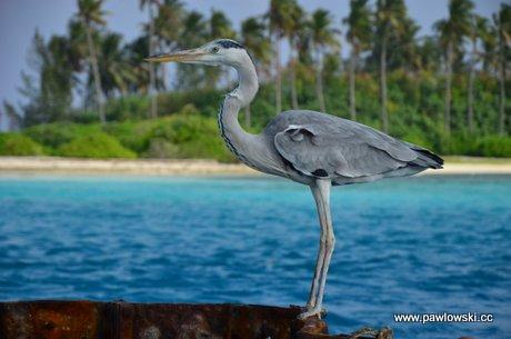 Malediwy - raj na ziemi? 1