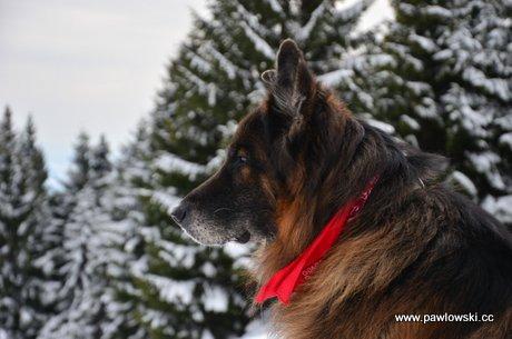 Podróże z psem; po Polsce
