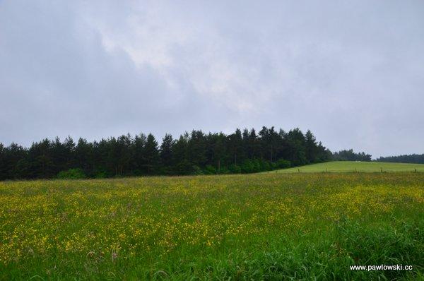 Główny Szlak Beskidzki; Puławy Górne - Prełuki 10