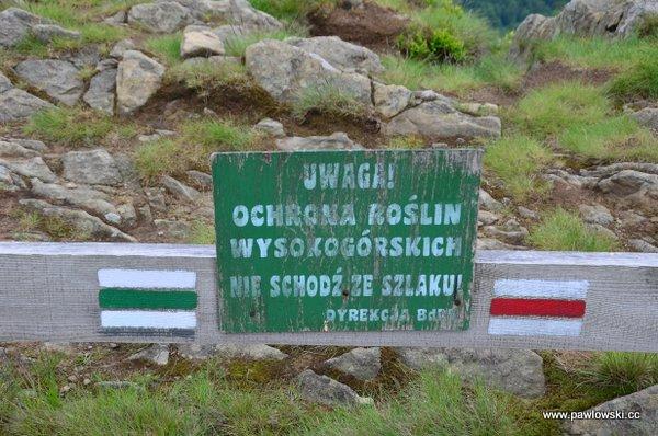 Główny Szlak Beskidzki; Połonina Wetlińska - Wołosate 13