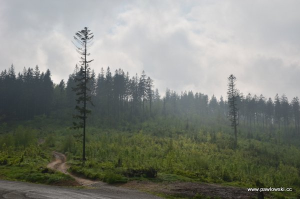 Główny Szlak Beskidzki; Ustroń - Schronisko PTTK naPrzysłopie podBaranią Górą 13