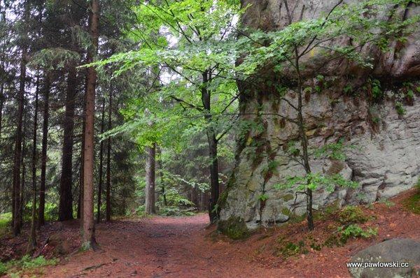 Główny Szlak Sudecki; Wambierzyce - Dańczów 15