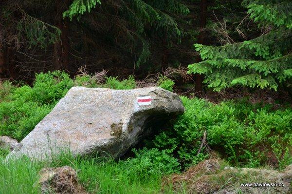 Główny Szlak Sudecki; Świeradów Zdrój - Schronisko PTTK Odrodzenie naPrzełęczy Karkonoskiej 20