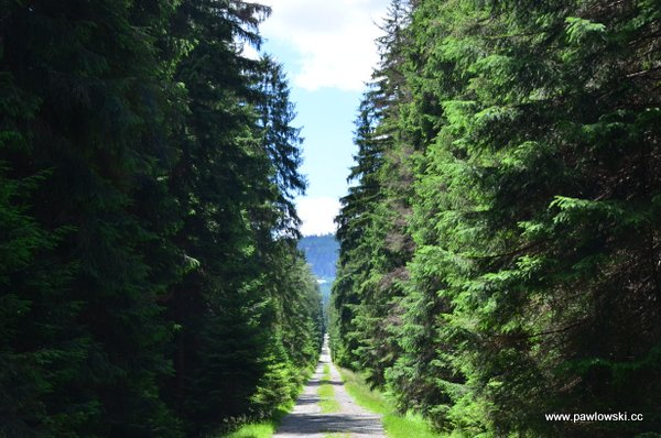 Główny Szlak Sudecki; Dańczów - Schronisko PTTK Jagodna (Przełęcz Spalona) 17