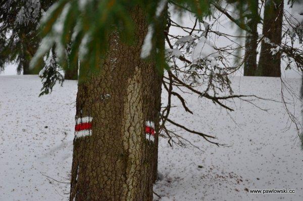 Krowiarki - Babia Góra - Markowe Szczawiny 15