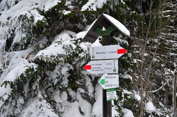 Krowiarki - Babia Góra - Markowe Szczawiny 19