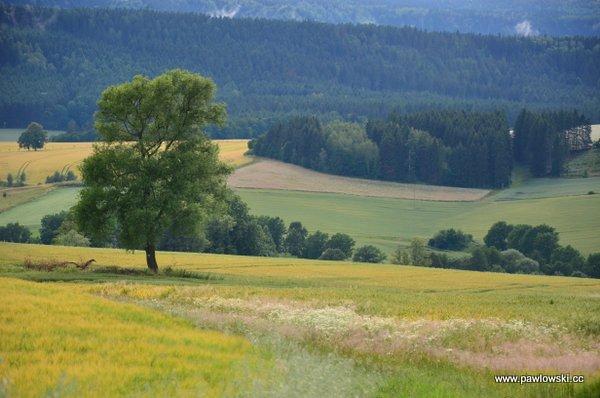 Główny Szlak Sudecki; Schronisko Zygmuntówka - Wambierzyce 29