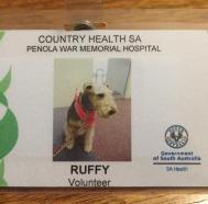 Ruffy's volunteer badge